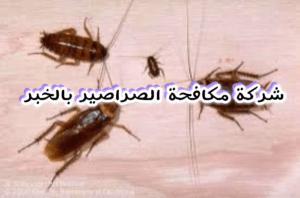 شركة مكافحة الصراصير بالخبر