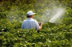 شركة رش مبيدات بعنك