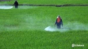 شركة رش مبيدات بالجبيل