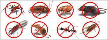 Photo of شركة مكافحة حشرات بالدمام 920008956