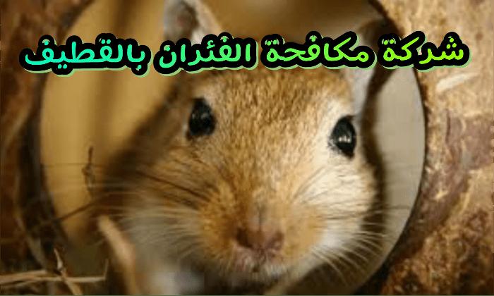 Photo of شركة مكافحة الفئران بالقطيف 920008956