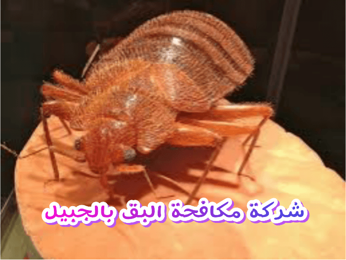 Photo of شركة مكافحة البق بالجبيل 920008956