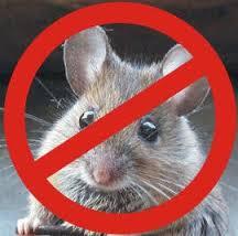 Photo of شركة مكافحة الفئران بالدمام 920008956