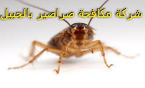 شركة مكافحة صراصير بالجبيل