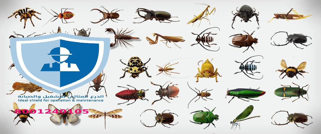 أفضل شركة إبادة حشرات بالرياض