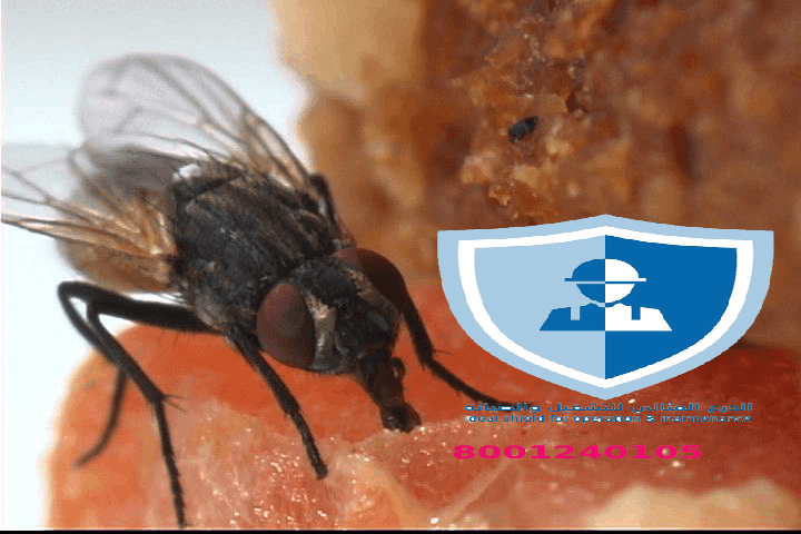 شركة مكافحة ذباب بالرياض