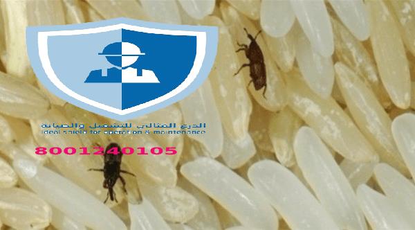 شركة مكافحة حشرات مستودعات بالرياض