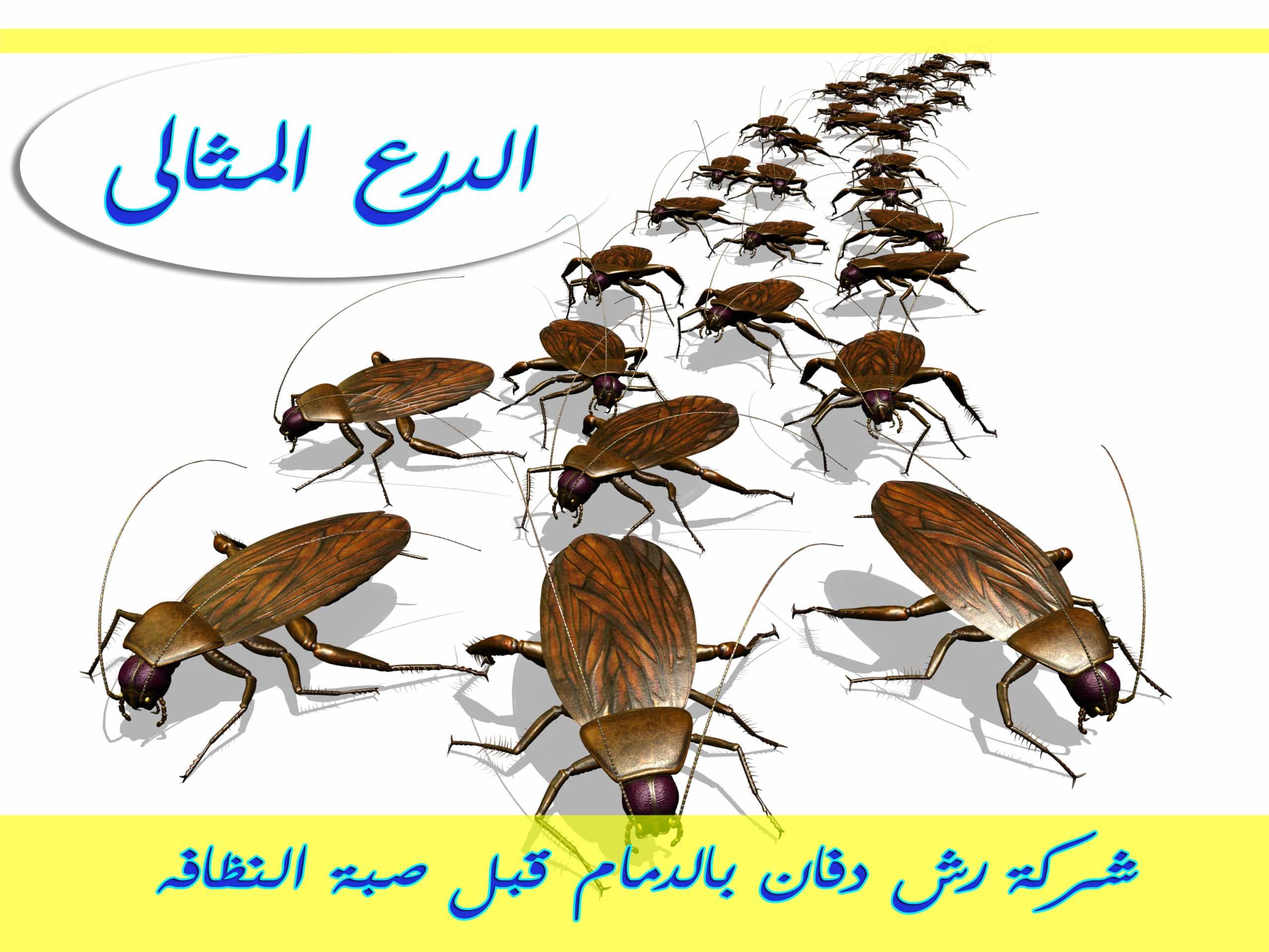 Photo of شركة رش دفان بالدمام قبل صبة النظافه 0533766855