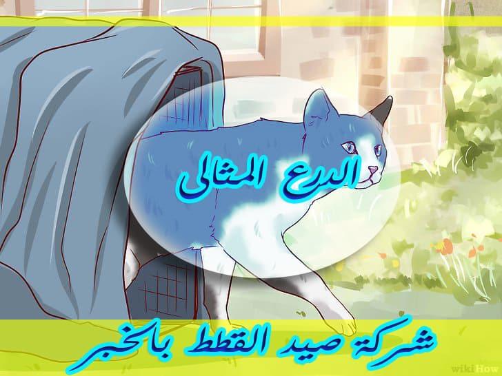 Photo of شركة صيد القطط بالخبر 0533766855