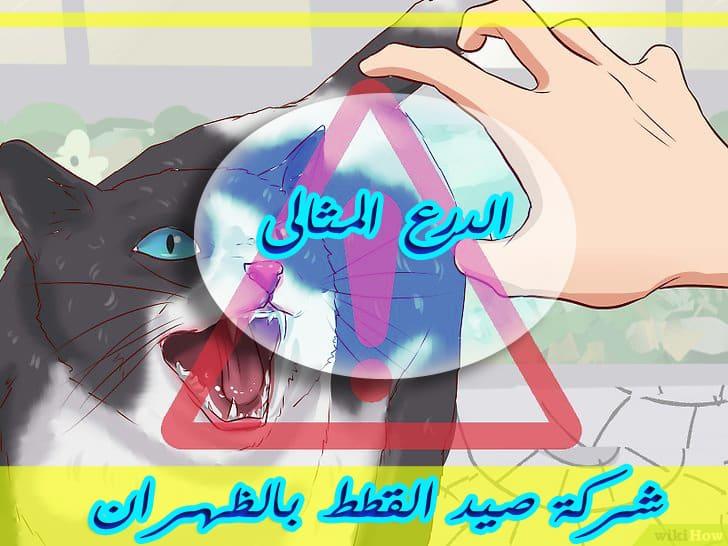 Photo of شركة صيد القطط بالظهران 0533766855